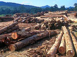 Abholzung  Copy:WWF