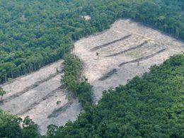 Regenwald Abholzung Copyright by Roberto Maldonado / WWF