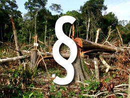 Todesurteil für Amazonas-Regenwald Bild:WWF