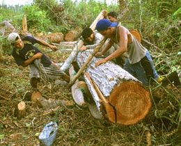260_illegale_Abholzung_f_Palmoel_Kalimantan__c__WWF_Alain_Compost