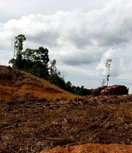 Nur noch die Hälfte der Insel Borneo sind von Wald bedeckt. © Samsul Komar / WWF-Indonesia