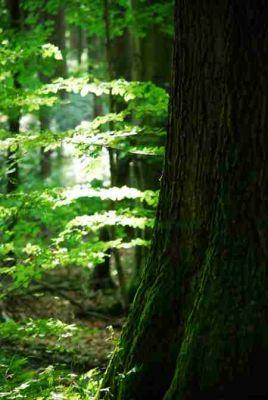Buchenwälder stecken voller Leben