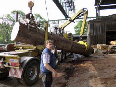 techn. Angestellter beim Furnierwerk Wehmeyer, beim Abladen des Baumes Foto IFN Wehmeyer Furnierwerk