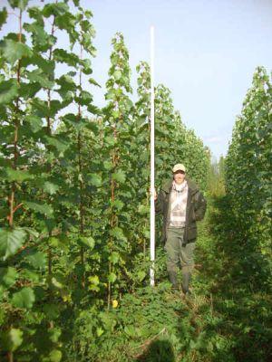 HAWK-Doktorandin Iris Schmiedel freuAuf einer Deponie wuchsen diese Pappeln innerhalb eines Jahres über drei Meter in die Höhe.