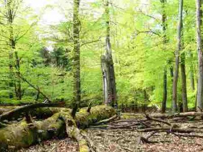 Naturnahe Waldbewirtschaftung erhält Lebensraum