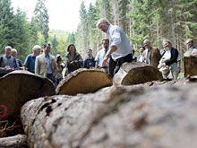 Die Holzvorräte Deutschlands sind mittlerweile die größten in Europa, Quelle: Guido Bergmann / BPA