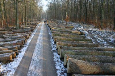 Holzversteigerung