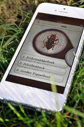 Screen Lernen Kaeferkunde von Nadine Weiberg Foto Nadine Weiberg