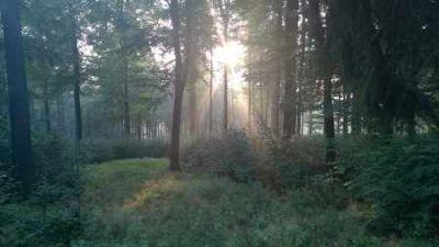 Sonnenaufgang im Wald mit Buchen
