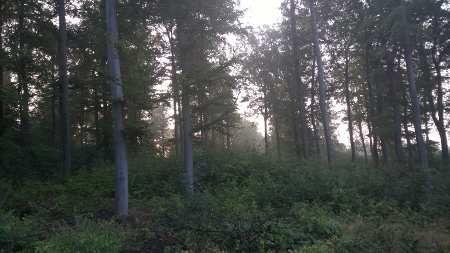 CO2 Speicher Wald