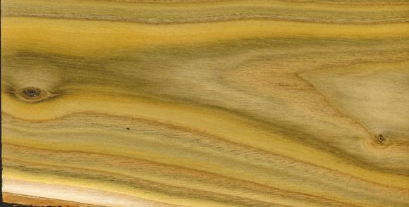 Holz Von Essigbaum Bild Vergrößern