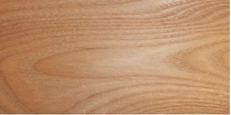 Rüster Holz rüster rot holzwurm page holz mit how